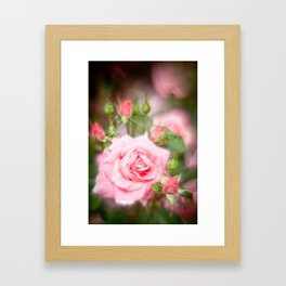 Rose pink Framed Art Print