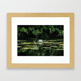 Lone Lily Pad Framed Art Print