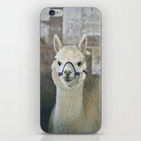 alpaca iPhone & iPod Skins featuring White Alpaca  by Laura Ruth