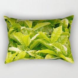 Indian variety of tea Rectangular Pillow