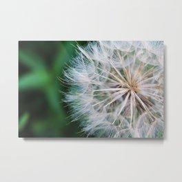 Midsummer Seeds Metal Print