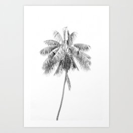 Palm in Black and White Art Print