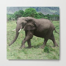 Moments Before the Elephant Charged Us Metal Print