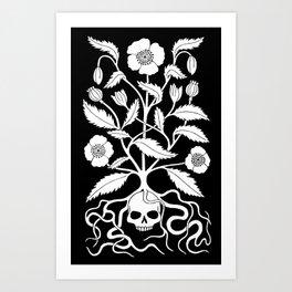 Opium Poppy Kunstdrucke