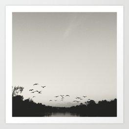Flying Geese  Art Print