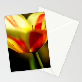 Mezzo Tulip Stationery Cards