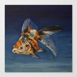 Calico Goldfish Canvas Print