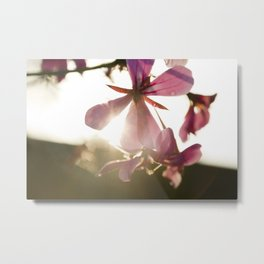 Sun set flower Metal Print