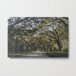 Wormsloe Live Oak Avenue - Savannah II Metal Print