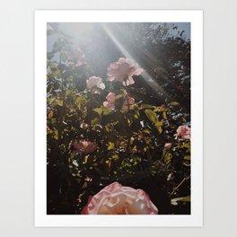 A New Flower Art Print