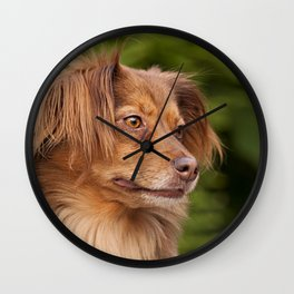 A cute brown dog portrait Wall Clock