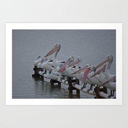 Pelicans of Meningie Art Print