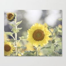 Sunflower Flower Photography, Yellow Sunflowers Floral Nature Photography Canvas Print