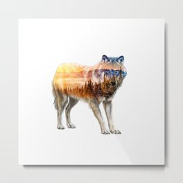 Wolf Wander |I| Metal Print