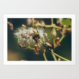 Little Beetle Art Print