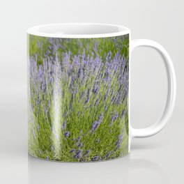 lavender field 2 Coffee Mug
