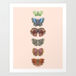 My Moth Collection Art Print