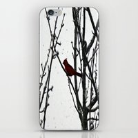 cardinal iPhone & iPod Skins featuring Cardinal by Emma Nettles
