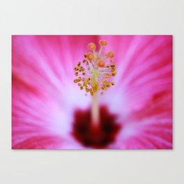 Hibiscus Stigma Canvas Print
