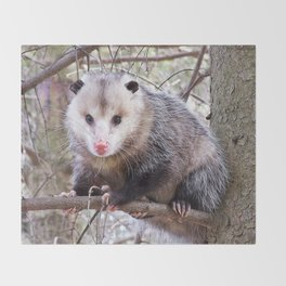 Possum Staredown Throw Blanket