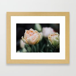Returning Spring Framed Art Print