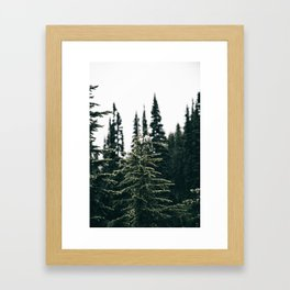 Grey Jay in The Trees Framed Art Print