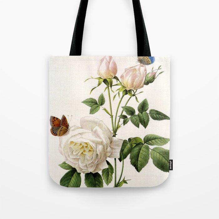 Vintage Botanical Illustration By P J Redoute White Rose Flowers