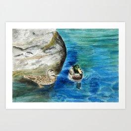 Lake Tahoe Duck Couple Art Print