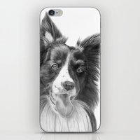 border collie iPhone & iPod Skins featuring Border collie 3 by Doggyshop