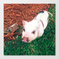 piglet Canvas Prints featuring Piglet {Instagram} by JJBegonia