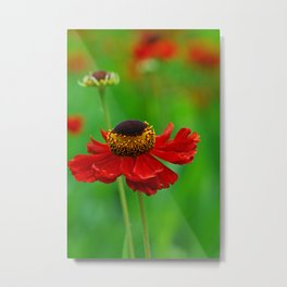 Summer flowers 0219 Metal Print