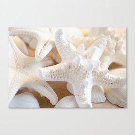 White Starfish Canvas Print