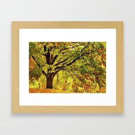 Golden Oak Tree Framed Art Print