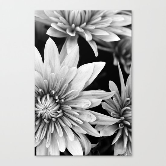 black and white flowers,.  Canvas Print