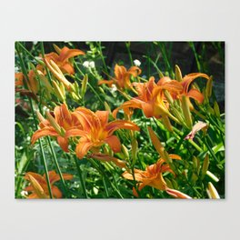 Dancing tiger Lilly Canvas Print