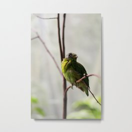 Green Bird Metal Print