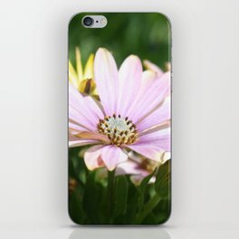 African Daisy Close Up iPhone Skin