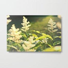 Sunlight flowers Metal Print