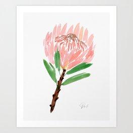 King Protea in Blush Pink Art Print