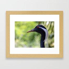Demoiselle Crane Portrait Framed Art Print