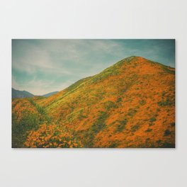 California Poppies 025 Canvas Print