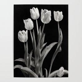 Monochrome Tulips Poster
