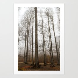 Autumn fog and forest trees - Nature photography Art Print