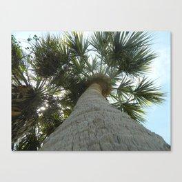 Tall Florida Palm Canvas Print