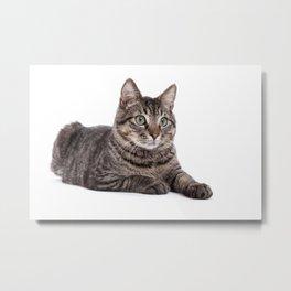 Cute Tabby Cat Metal Print