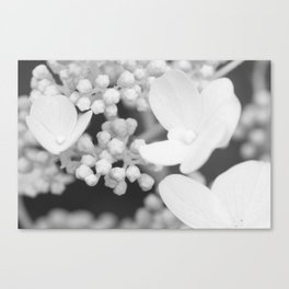Soft Stages no. 1 Canvas Print