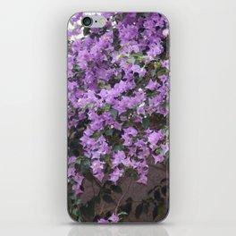 Longwood Gardens - Spring Series 15 iPhone Skin
