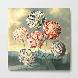 Carnations : New Illustration Of The Sexual System Metal Print