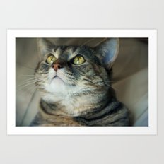 Kitty Cat Art Print
