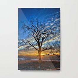 Sunburst Cottonwood 2 Metal Print